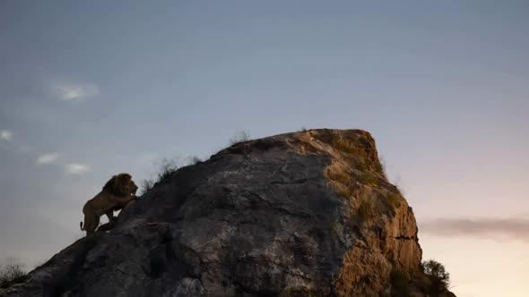 Lví král (2019) CZ Dabing avi