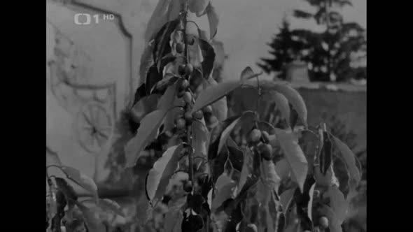 Pysna princezna (1952) mkv