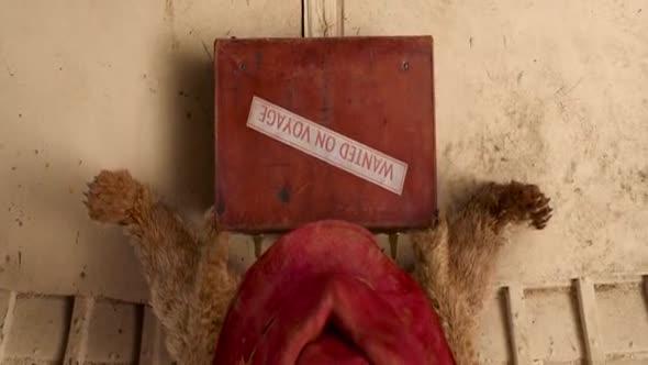 Paddington Paddington (2014) Komedie  Rodinný CZ dabing avi
