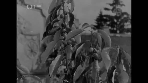 Pyšná Princezna (1952) CZ Filmová Pohádka avi