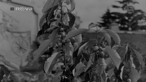 PYŠNÁ PRINCEZNA   1952 ( NOVA hd   720p ) mkv